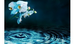 Linha águas florais